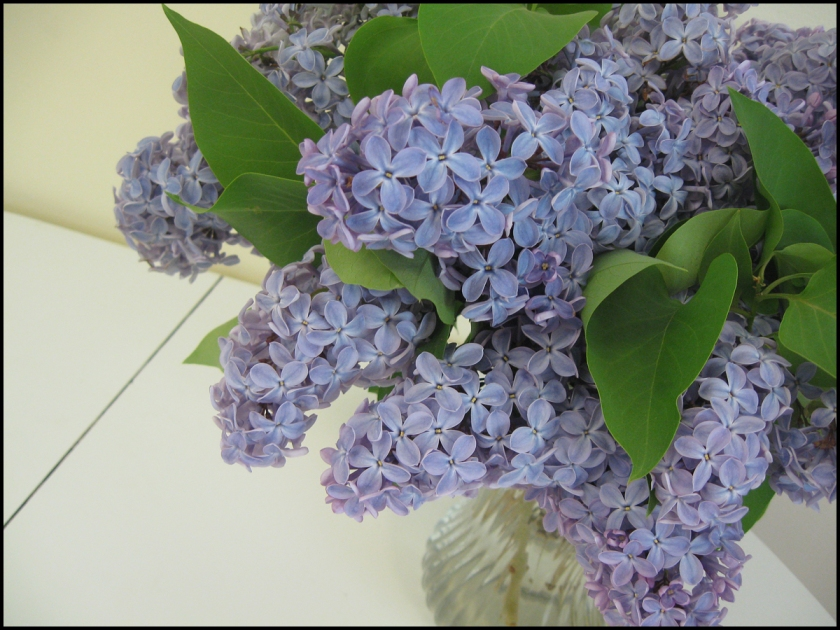 """""""lilacs-gift from mrs p"""" 61114-1200"""