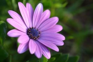 daisy by sld 1200