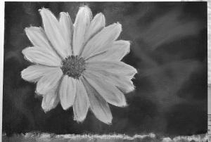Daisy painting bw 1200
